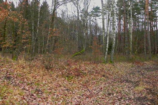 prodej pozemku 3033m skalka u doks stromy